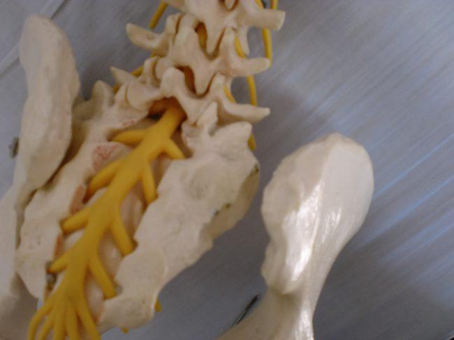骨盤、仙腸関節